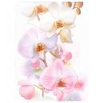 Декор Tropicana Orchids белый 25*35