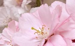 Декор 40*25 массив Букет розовый 662