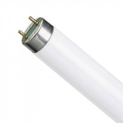 Лампа Osram L36W/840